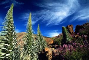 Канарские острова - Остров Тенерифе, Испания