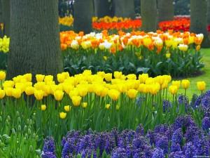Парк цветов Кекенхоф (Keukenhof) в Голландии