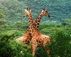 Сафари в Африке, Природа и Животные