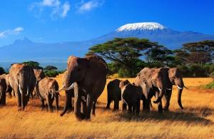 Сафари в Африке, Кения Килиманджаро