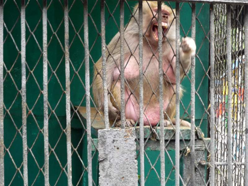 Приматы в Липецком зоопарке.