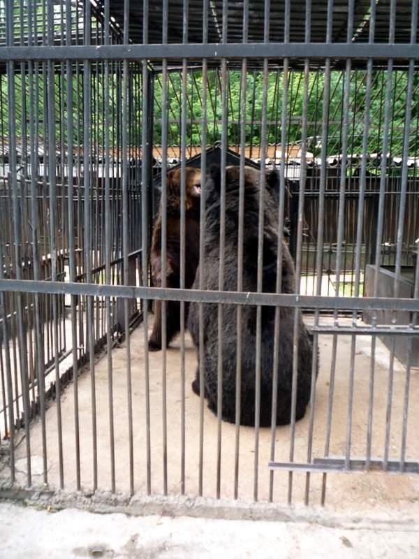 Медведи в Липецком зоопарке.