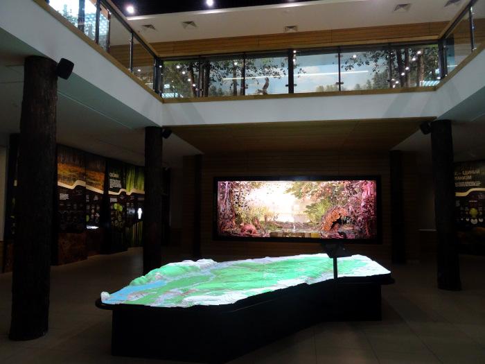 Экспозиция на 1 этаже в музее природы Воронежского биосферного заповедника.